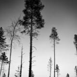 Tre erfarne, nordiske forfattere skriver præcist og kontant, hvilket resulterer i solide krimier.