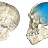 En rekonstruktion af kranie-fundet fra Jebel Irhoud.