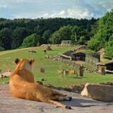 Dyrene i Ree Safari Park har masser af plads at boltre sig på.