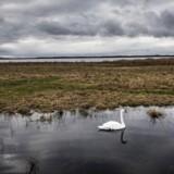 Roskilde fjord ved udløbet af Havelse å mellem Frederikssund og Frederiksværk d. 11. februar 2016.