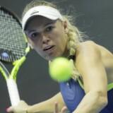 Caroline Wozniacki skal i denne uge forsøge at vinde en stor WTA-titel i Doha, hvor hun sidste år nåede frem til finalen. Scanpix/Dmitri Lovetsky