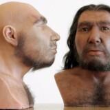 De to voksbyster gengiver to neandertalere, hvis ansigter er blevet gengivet ud fra formen af deres kranier. Foto:Joerg Carstensen/EPA