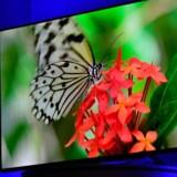 Ultra-HD bliver 2015s TV-skærm med en opløsning, der er fire gange højere end på en fuld-HD-skærm. Her er det Panasonics 65 tommer store AX800-model, der fremvises på sidste uges Consumer Electronics Show i Las Vegas i USA. Foto: David Becker, Getty/AFP/Scanpix