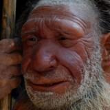 Det stille smil hos denne rekonstruktion på neandertalmuseet i Tyskland er på sin plads: Ny forskning viser, at det snurrede noget hurtigere bag neandertalpanderne, end vi i Homo sapiens har forestillet os. Arkivfoto: Horst Ossinger/DPA