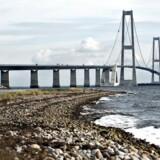 Rep fra Sprogø, hvor naturplejeplaner har reddet truede fugle- og frøarter. Storebæltsbroen.