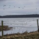 Arkivfoto: En hundelufter fandt onsdag formiddag en død person ved Roskilde Fjord.