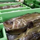 Overskuddet i fiskeriet er så stort, at man kan overveje at beskatte overskuddet, mener eksperter.