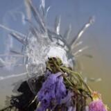En blomst pryder et skudhul i et butiksvindue efter 22-årige Elliot Rodgers massakre i Isla Vista-kvarteret i Californien sidste fredag. Her tog den sindsforvirrede universitetsstuderende seks mennesker med sig i døden i et nøje planlagt dræbertogt gennem studenterkvarteret.