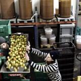Cider hitter, og nye danske producenter er dukket op. Blandt andre 'æblerov' i Valby. Vi fotograferer de to bag. Christopher Melin, stribet bluse, & Morten Sylvest Noer.