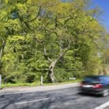 Mellem 2010 og 2014 skete 59 procent af dødsulykkerne på de danske landeveje ved en hastighed på højt 99 kilometer i timen, oplyser vejdirektoratet. Free/Colourbox
