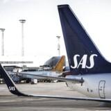 SAS vil fremover reducere lidt på antallet af ansatte i kabinen.