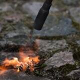 Ukrudtet skal kun svitses, ikke brændes, lyder rådet fra Beredskabsstyrelsen. Scanpix/Liselotte Sabroe/arkiv