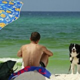 Så er familiefreden sikret. Med sand, vand og hund. Foto: Flickr