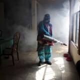 Zikavirussen har ramt hårdt i blandt andet Sydamerika.