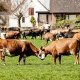 Landbrugspakken var tidligere på året en politisk varm kartoffel, og under forhandlingerne blev der fra flere sider advaret om, at den kunne være i strid med EU-retten.