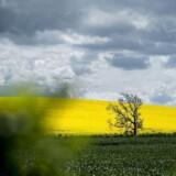 »Vi kan som landmænd derudover se, at mange marker, hvor der anvendes en skånsom mekanisk bearbejdning, men til gengæld anvendes Roundup, har et meget større liv under jorden.«