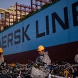 Betalingsstandsningen har skabt en bedre situation på markedet, og det vil understøtte priserne på containerfragt positivt resten af året og næste år, hvilket kan komme rederiet Maersk Line til gode. Arkivfoto.