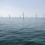 Den argentinske regering vil via auktionen tildele kontrakter på 600 megawatt vindenergi, 300 megawatt solenergi og 100 megawatt andre vedvarende energiprojekter. Arkivfoto: Vindmølleparken Horns Rev 2 med 91 vindmøller og en transformerstation ejet af Dong fotograferet fredag den 3. juni 2016 i Nordsøen ud for Esbjerg.. (Foto: Mathias Løvgreen Bojesen/Scanpix 2016)