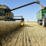 En del landbrug er tynget af høj gæld og har problemer med at betale af på deres lån.