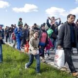 Mandag gik knap 200 flygtninge langs Sydmotorvejen ved Rødby og begyndte den lange vandring mod Sverige. Flygtningene var forinden stået af toget fra Tyskland på Rødby Havn Station.