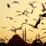 Suleymaniye-moskéen i Istanbul, Tyrkiet. Retssagerne mod i alt 11 menneskerettighedsforkæmpere, der er anklaget for at støtte terrororganisationer, skal foregå i Istanbul og Izmir. Scanpix/Carl De Souza/arkiv