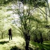 På tur i skoven.
