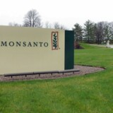 (FILES) In this April 7, 2014 file photo, a sign is seen at the headquarters of Monsanto, at Creve Coeur, Missouri, on April 7, 2014. Monsanto is the world's largest seed supplier. US seed giant Monsanto forecast a fall in full-year earnings on October 7, 2015 and announced job cuts in anticipation of continued low commodity prices that have hit the agriculture industry. Monsanto estimated earnings per share in fiscal year 2016, which began September 1, in the range of $5.10 to $5.60 on an ongoing basis that excludes exceptional items, down from $5.73 last year. AFP PHOTO / Juliette MICHEL