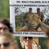 Demonstranter samlet foran River Bluff tandlægeklinik i Bloomington, Minnesota, for at protestere mod tandlægen Walter Palmer, der skød løven Cecil i Zimbabwe.
