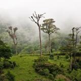 Tågeregnskoven lever op til sit navn i egnene omkring Monteverde. Fotos: Jesper Møller, Lotte Ramtung og PR