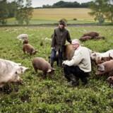 En ny opgørelse fra landbrugets udviklingscenter, Seges, viser, at siden 2008 er danske landmænds udgifter til bidragssatser steget fra 700 mio. kr. til 1,8 mia. kr.