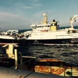 Rejer og hellefisk er svømmet i nettet i en sådan grad, at Polar Seafood noterer sig for et rekordregnskab. PR-foto