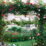 Lidt vest for menneskemasserne i, bagved og på plænerne neden for Sacré-Cœur finder man således i den lille Rue Burq den charmerende have af samme,navn.