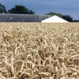 En ung landmand, der vil have foden over egen jord, er i konkurrence med kapitalstærke udlændinge.