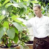 Stifter og direktør Peter Beier fra Peter Beier Chokolade forudser år med vækst og fremgang for for hans nu 15 chokoladebutikker. Her er han drivhuset i hovedkvarteret i Gurre i Nordsjælland omringet af kakaotræer, som dog kun bruges til undervisning.