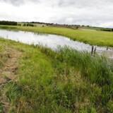 Arkivfoto: Retten i Holstebro har frifundet to landmænd for at have overtrådt randzoneloven ved at så afgrøder på randzoneareal på deres landbrugsejendom.