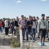 RB PLUS Løkke søger europæisk svar i asylkrise.Se Ritzau 7/9 2015 20.42.- - Løkke søger europæisk svar i asylkrise. Politikerne er i vildrede om, hvordan Danmark skal håndtere flygtningesituationen. Omkring 800 personer krydsede på et døgn den danske grænse for at søge asyl. / En stor gruppe flygtninge og migranter, der mandag efter klokken 10 ankom til Rødby på Lolland, er mandag den 7. september 2015 begyndt at gå mod nord - angiveligt med et ønske om at søge asyl i Sverige.
