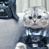 Katten Roku er blevet en fænomen online, hvor den poserer iført forskellige kostumer – her som kultfiguren Darth Vader fra Star Wars-filmene. Katten – og dens ejer – har i skrivende stund mere end 400.000 følgere på det sociale medie Instagram.