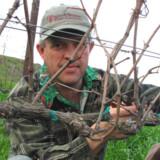 Den danskfødte vinbonde Peter Work har aldrig fortrudt sit karriereskift.