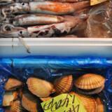 Udvalget af fisk – og sælgere af disse – på verdens største fiskemarked er enormt. Adskillige af delikatesserne er arter, man på skandinaviske breddegrader aldrig har hørt om.