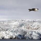 Nordenskjoldbreen på Svalbard ligger så højt mod nord, at den ikke er i fare for at smelte væk lige med det samme. Men længere sydpå i Norge står det grelt til.