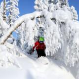 Katrine Pedersen opfordrer forældre til at droppe de høje forventninger og nyde det skiløb, børnene kan overskue.