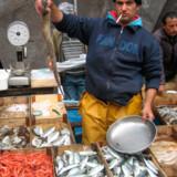 Tunfisken er kongen sammen med de sicilianske farvandes stolthed, sværdfisken.