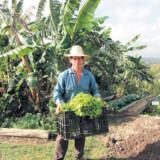 Hele dalen er ét stort frugtbart område, som holder de lokale forsynet, så de ikke behøver at være på ration af fødevarer som inde i storbyerne.
