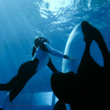 I Universal Studios i Orlando, Florida byder på udstillinger, svømmeture med delfiner og kæmpe shows.