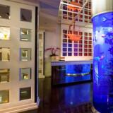 Et roligt blåt lys, der efter sigende skulle være godt for hjernens afslapningscenter, kendetegner det lille boutique-hotel Dream.