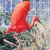 Akvariet i Jardin del Turia er et af de største i Europa.