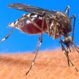 Ifølge Statens Serum Institut (SSI) er der i Danmark fra 2007-2016 registreret 69 tilfælde af malaria efter ophold i Asien. Over 90 procent af disse tilfælde skyldes smitte i Indien, Afghanistan eller Pakistan.