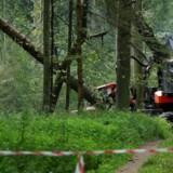 Fræsende motorsave og træfældning i Europas ældste urskov har udløst fornyet strid mellem EU og Polen.