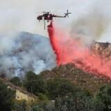 Californien mærker klimaforandringerne med skovbrande, skovdød og smog. / AFP PHOTO / Frederic J. BROWN