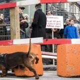 Beboerne i Pisserenden i København er vrede over, at kommunen er i gang med at forskønne deres kvarter og eksempelvis laver fortovsudvidelser, der ikke indgår i den aftale, som er vedtaget.